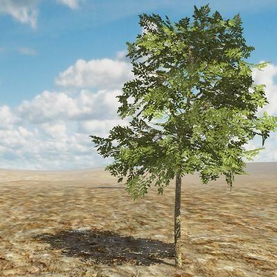3D Katalog Pflanzen: Eschen