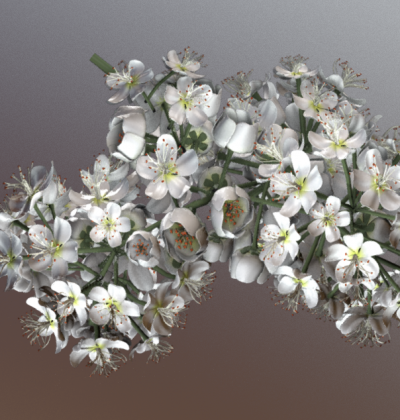 Top 10 unserer besten 3D-Baum-Modelle: Eberesche Blüte/ Rowan Blossom