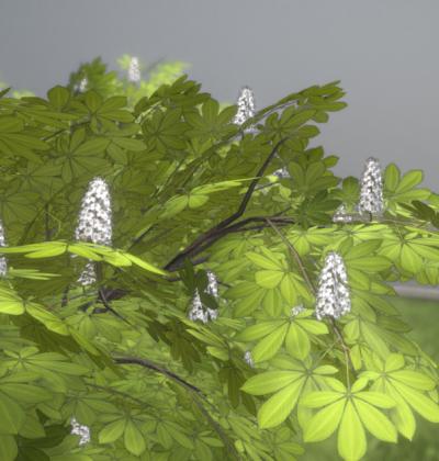 Hochdetailliertes 3D-Baum-Modell: Kastanien im Frühling