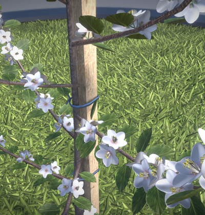 Hochdetailliertes 3D-Baum-Modell: Birnbaum im Frühling in verschiedenen Größen, mit Texturen und Materialien.