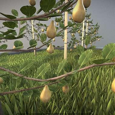 Top 10 unserer besten 3D-Baum-Modelle: Birnbaum im Sommer.