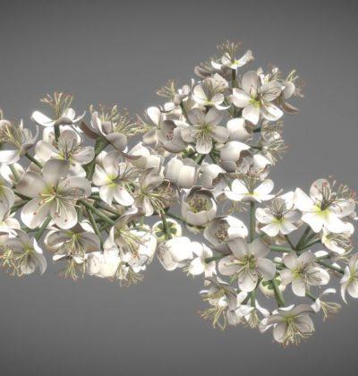 Top 10 unserer besten 3D-Modelle: Blüte (high poly)