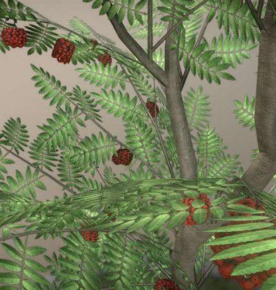 3D-Baum-Modell Typ Eberesche
