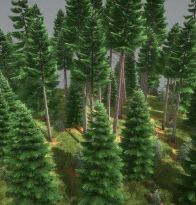 Online-Bibliothek für 3D-Modelle: Fichtenwald