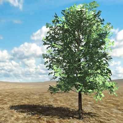 3D Katalog Pflanzen: Linden