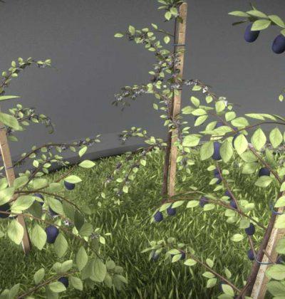 Hochdetailliertes 3D-Baum-Modell: Pflaume im Sommer in verschiedenen Größen, mit Texturen und Materialien